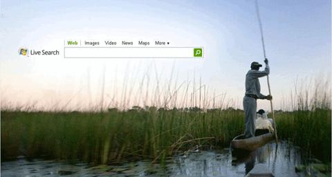 MSN Live Search