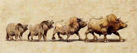 Bear To Bull