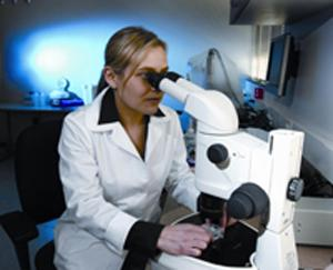 Dr. Mandy Katz-Jaffe examines embryos microscopically at the Colorado Center for Reproductive Medicine in Lone Tree, Colo. Photo: Colorado Center for Reproductive Medicine