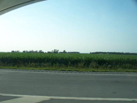 Corn along I-75 Corridor in Ohio on July 6 2012
