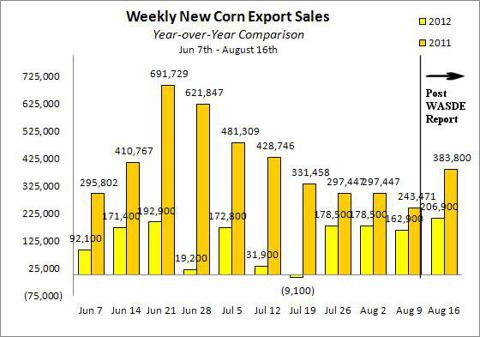 New corn export sales between June 7th and August 16th