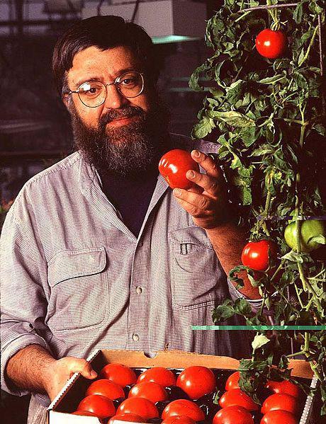 File:Tomatoes ARS.jpg