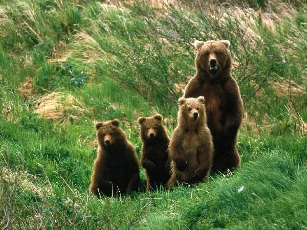 Image of Bear Family