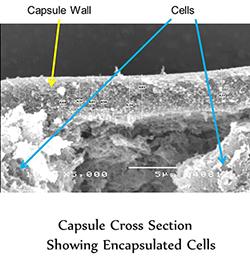 LIVE-CELL ENCAPSULATION