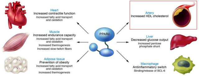 Figure 3: Therapeutic targets of PPAR agonists in the metabolic syndrome