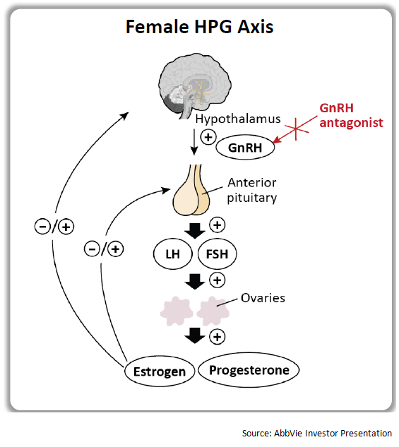 investigational endometriosis therapy elagolix may