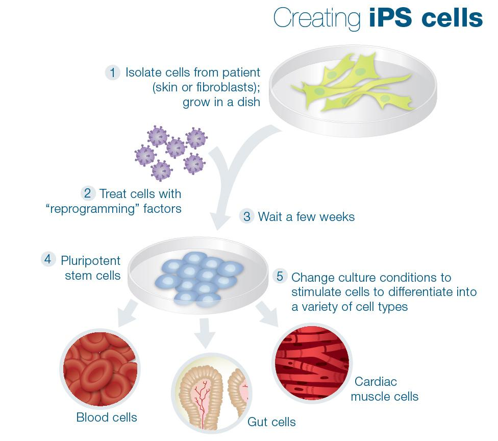 Is It Time To Invest In Stem Cell Biotechs? | Seeking Alpha